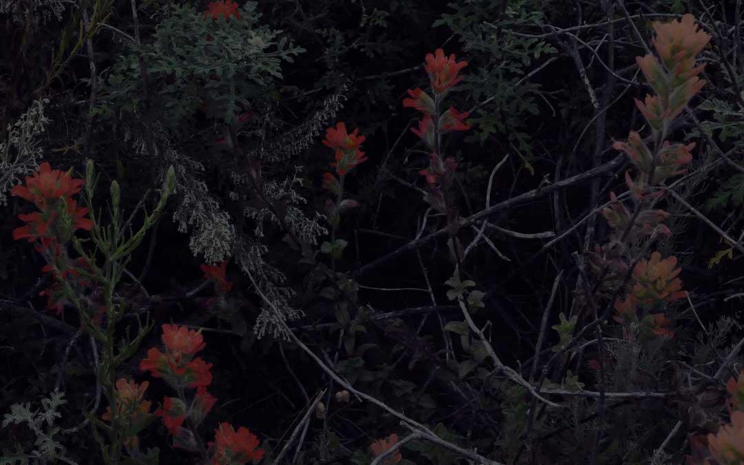 Crossing in the dark